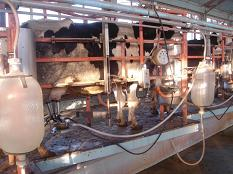 An unhygienic environment leads to an increased risk of mastitis and lowered milk quality