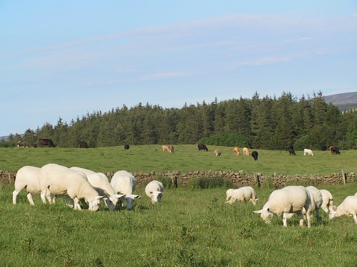 15 Gastrointestinal Nematode Infestations in Sheep integrated pasture management