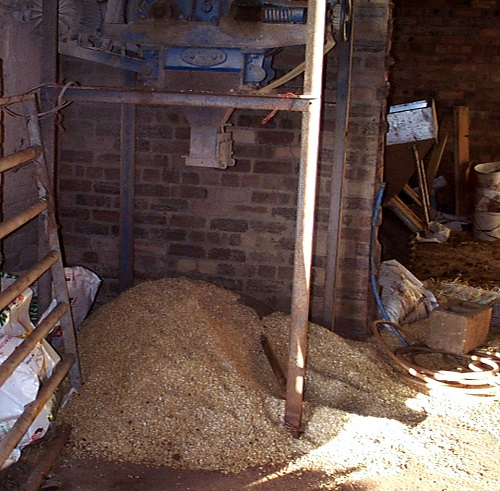 6 All sheep feed should be stored in vermin-proof facilities