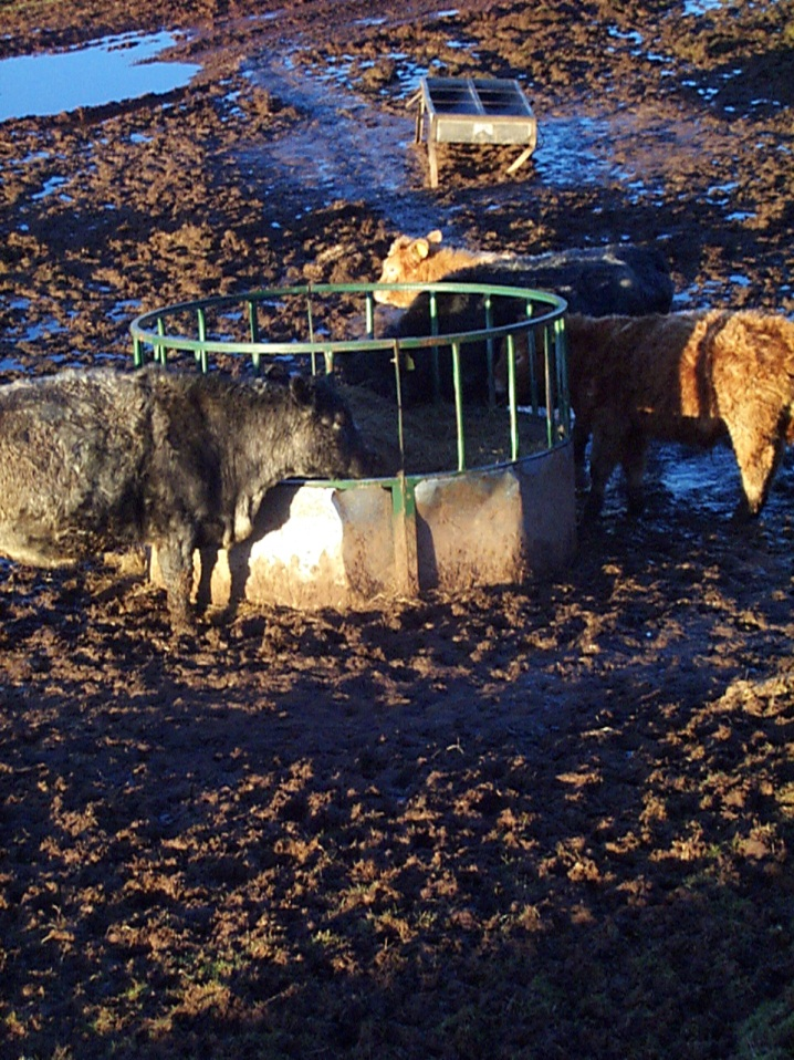 Feed troughs and ring feeders must be placed on a suitable hard standing area
